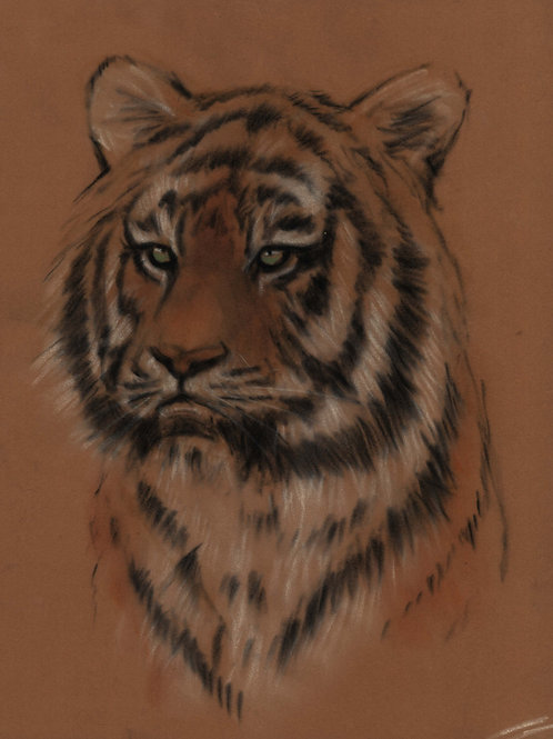 Tiger Original Pastel Sketch