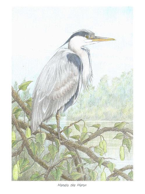 'Heratio the Heron' Open Edition Print