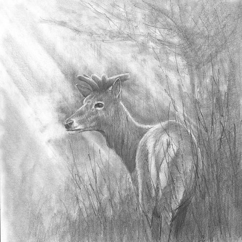'Misty Glade' Original Sketch