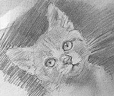Complete Cat.jpg