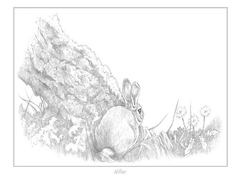 'Willow' Open Edition Print