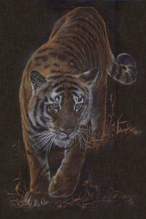 Tyger, Tyger - Original tiger drawing