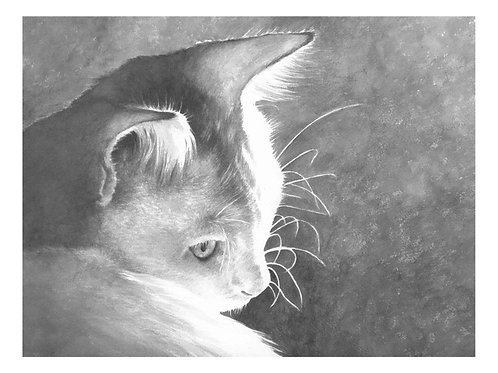 'PHOEBE' OPEN EDITION CAT PRINT