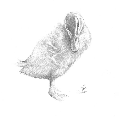 Not Such An Ugly Duckling Original Sketch