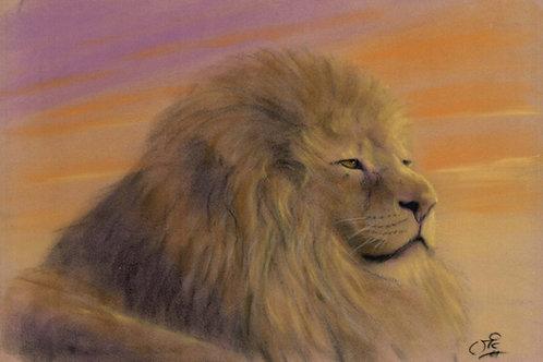Lion Original Pastel on Velour
