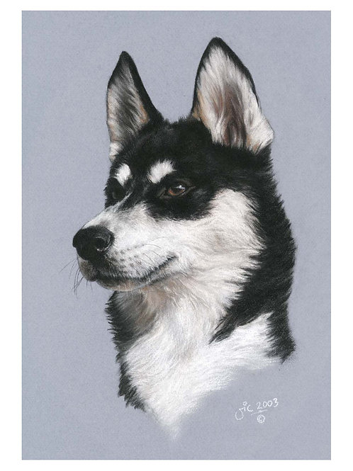 'ELLIOTT' OPEN EDITION HUSKY PRINT