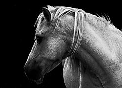 Horse Ref.jpg