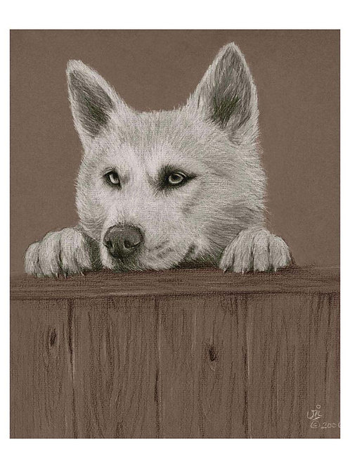 'WHO'S THERE' OPEN EDITION HUSKY PRINT