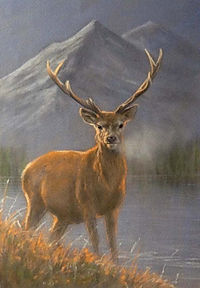 Stag Completed Image.jpg