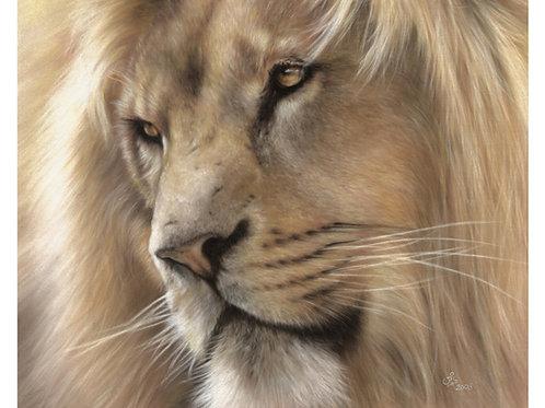 'Manzi' Limited Edition Lion Print
