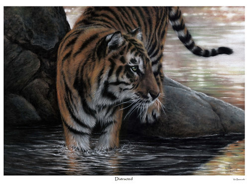 'DISTRACTED' LIMITED EDITION TIGER PRINT