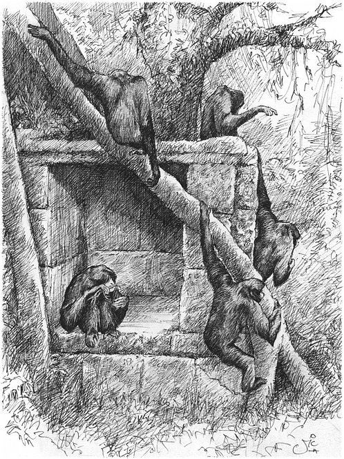 'Bandar Log' Original Sketch