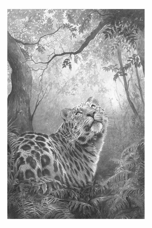 'INTO THE WILD' LIMITED EDITION AMUR LEOPARD PRINT