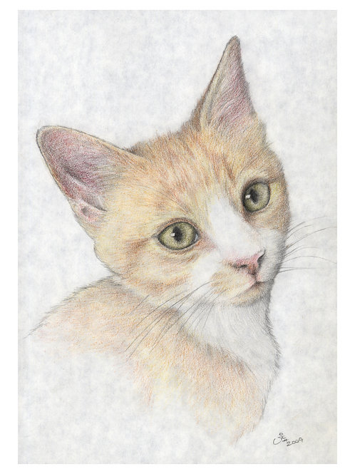 'FORREST' OPEN EDITION GINGER CAT PRINT