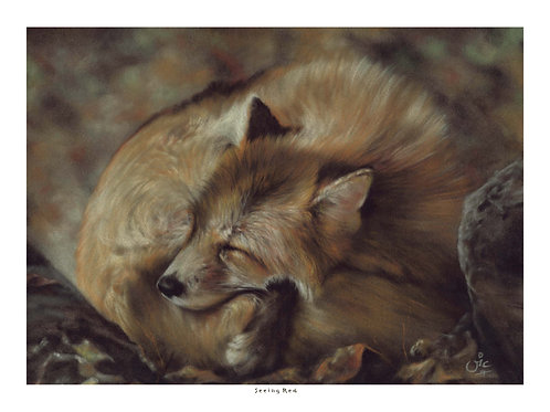 'SEEING RED' OPEN EDITION FOX PRINT