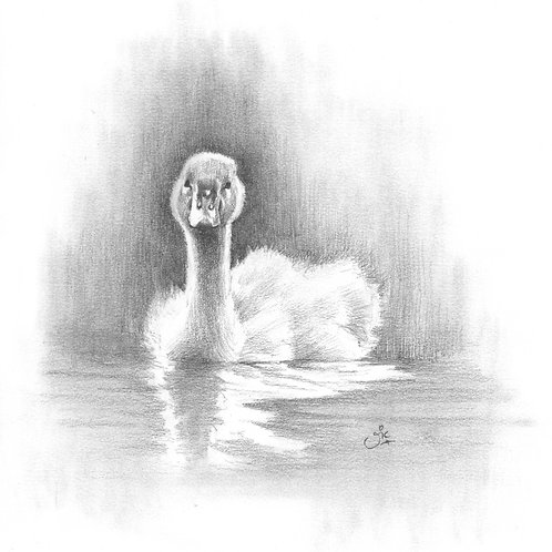 Swanlet Original Sketch