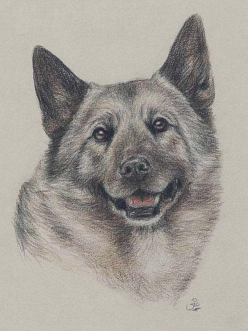 Norwegian Elkhound Original drawing