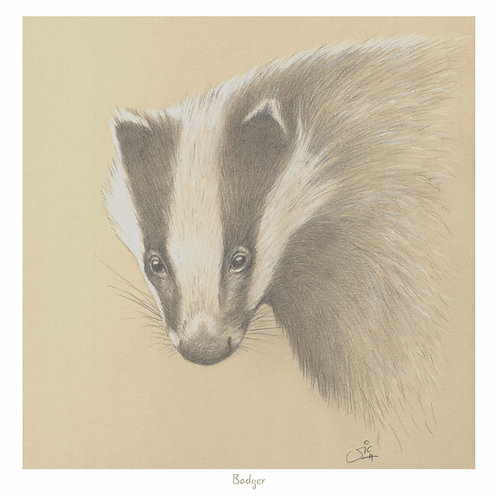 Badger - Open Edition Print
