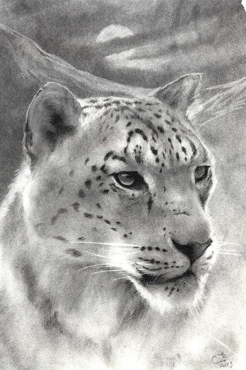 Original Snow Leopard in Charcoal & Carbon Pencil