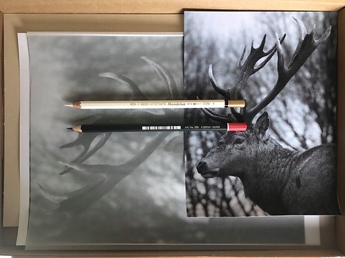 Stag in Graphite & White Pencil Box Set