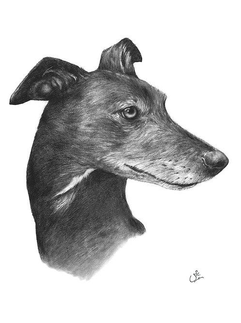 Greyhound - Open Edition Print