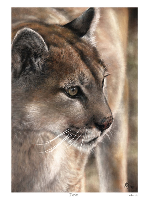 'Tohon' Limited Edition Mountain Lion Print