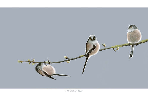'The Darling Buds' Open Edition Long Tailed Tit Print
