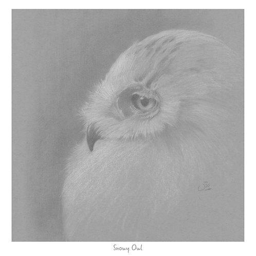 Snowy Owl - Open Edition Print