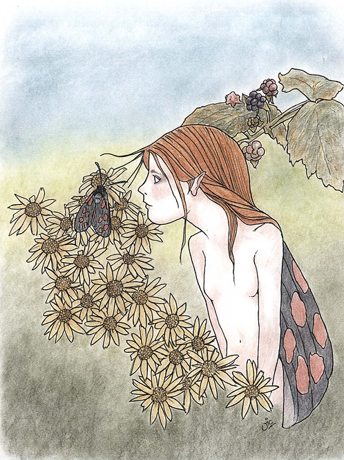 'The Burnet Fairy' Original Sketch
