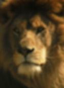 WHF Lion WS.jpg