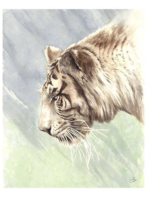 'NARNIA' OPEN EDITION WHITE TIGER PRINT