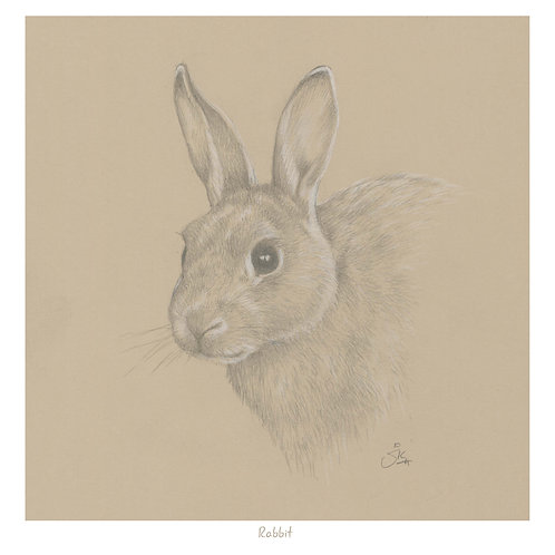 Rabbit - Open Edition Print
