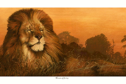 'REMAINS OF THE DAY' LIMITED EDITION LION PRINT