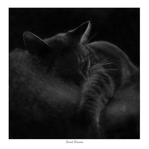 'Sweet Dreams' Open Edition Cat Print