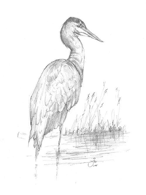Heratio Heron Original Sketch