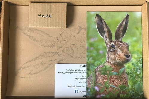 Hare in Pastel Box Set