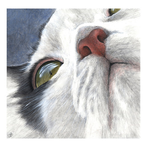 'OSCAR WILDECAT' OPEN EDITION CAT PRINT