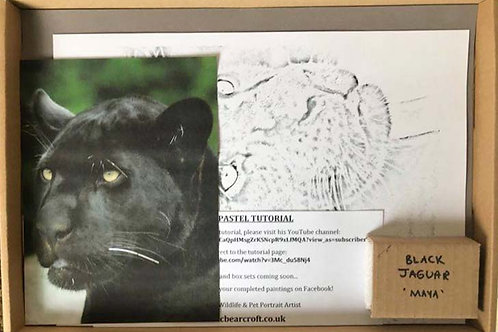 Black Jaguar 'Maya' in Pastel Box Set