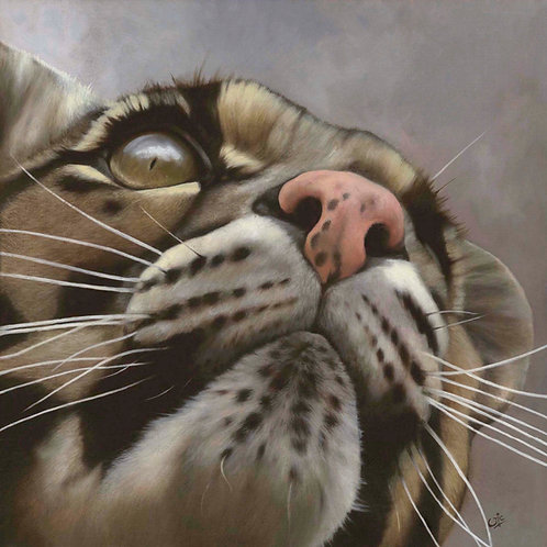 Head in the Clouds - Original Clouded Leopard in Oils