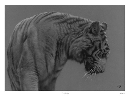 'SERENITY' LIMITED EDITION TIGER PRINT