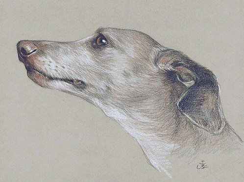 Whippet Original drawing