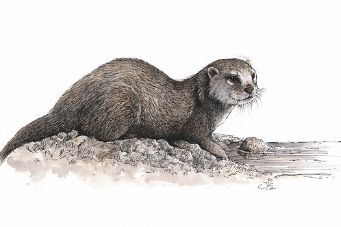 'Otter' Original Sketch