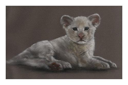 White Lion Cub Open Edition Print