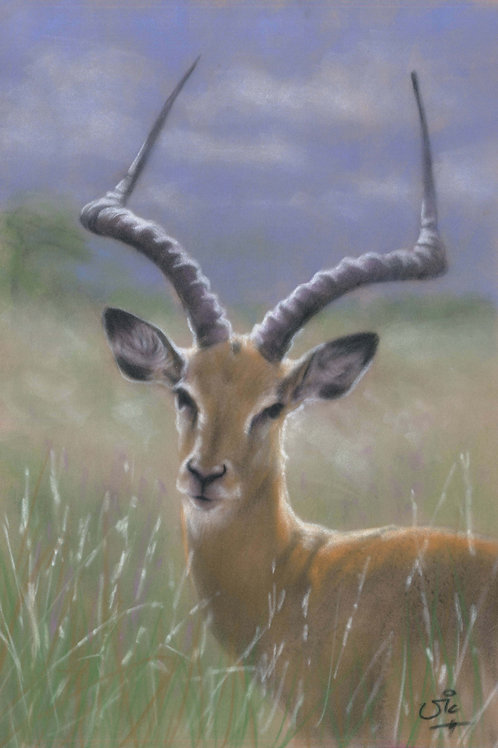 Impala Original Pastel on Velour