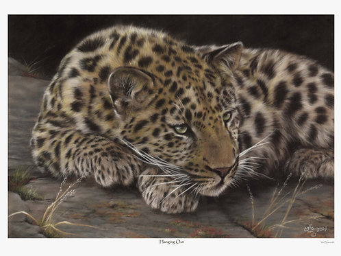 'HANGING OUT' LIMITED EDITION AMUR LEOPARD PRINT