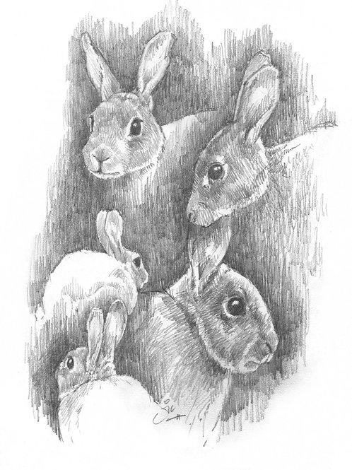 Rabbit Studies Original Sketch