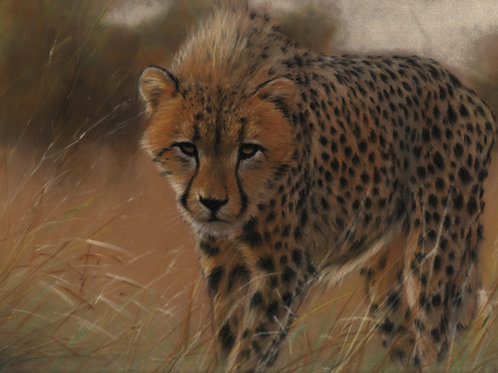 Cheetah Original Pastel Painting