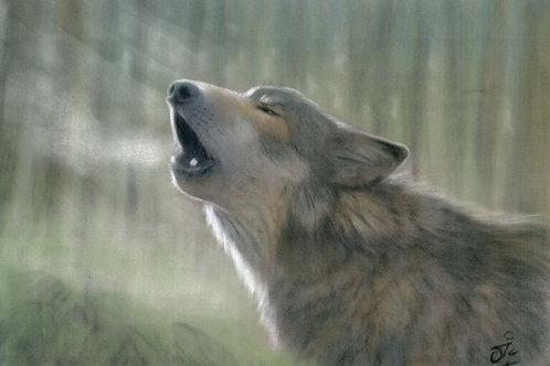 Wolf Original Pastel on Velour