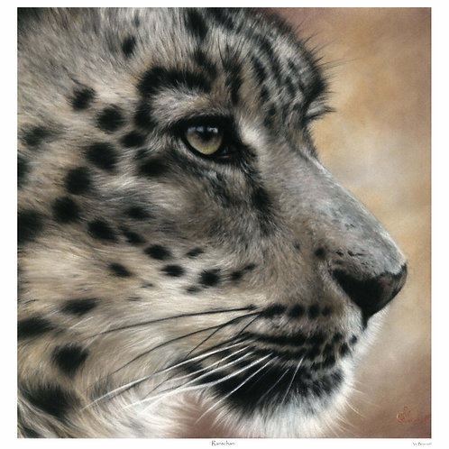 'RANSCHAN' LIMITED EDITION SNOW LEOPARD PRINT