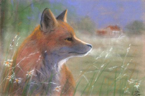 Red Fox Original Pastel on Velour